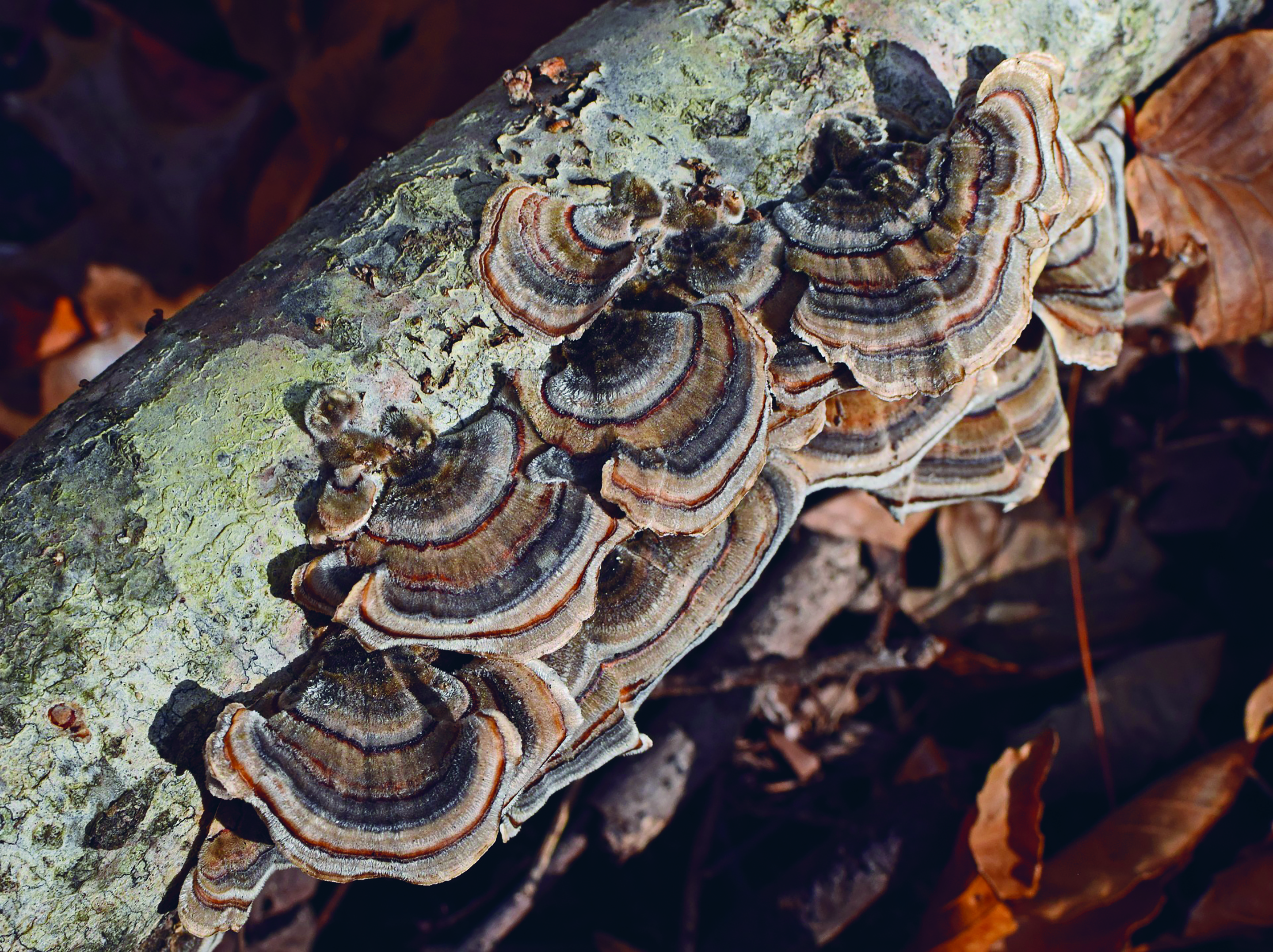 In the future, fungi are likely to play a major role within bioenergy, experts said (RBG Kew)