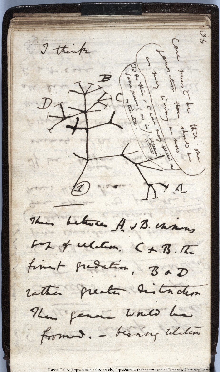 Charles Darwin's seminal 1837 'Tree of Life' sketch has been reported as stolen from Cambridge University Library (Cambridge University Library/ PA)