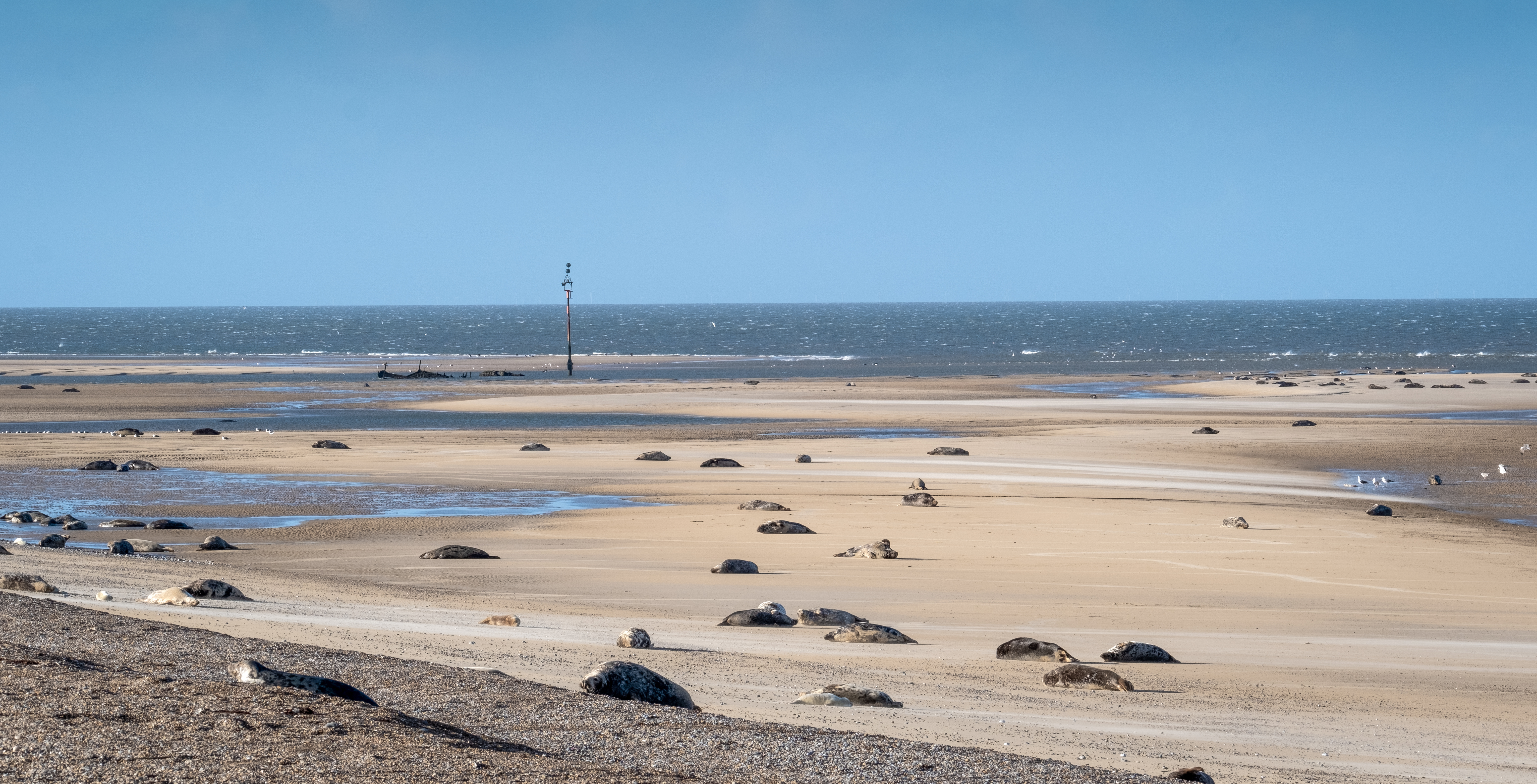 Blakeney Point is home to England's largest grey seal colony (National Trust Images/Hanne Siebers/PA)