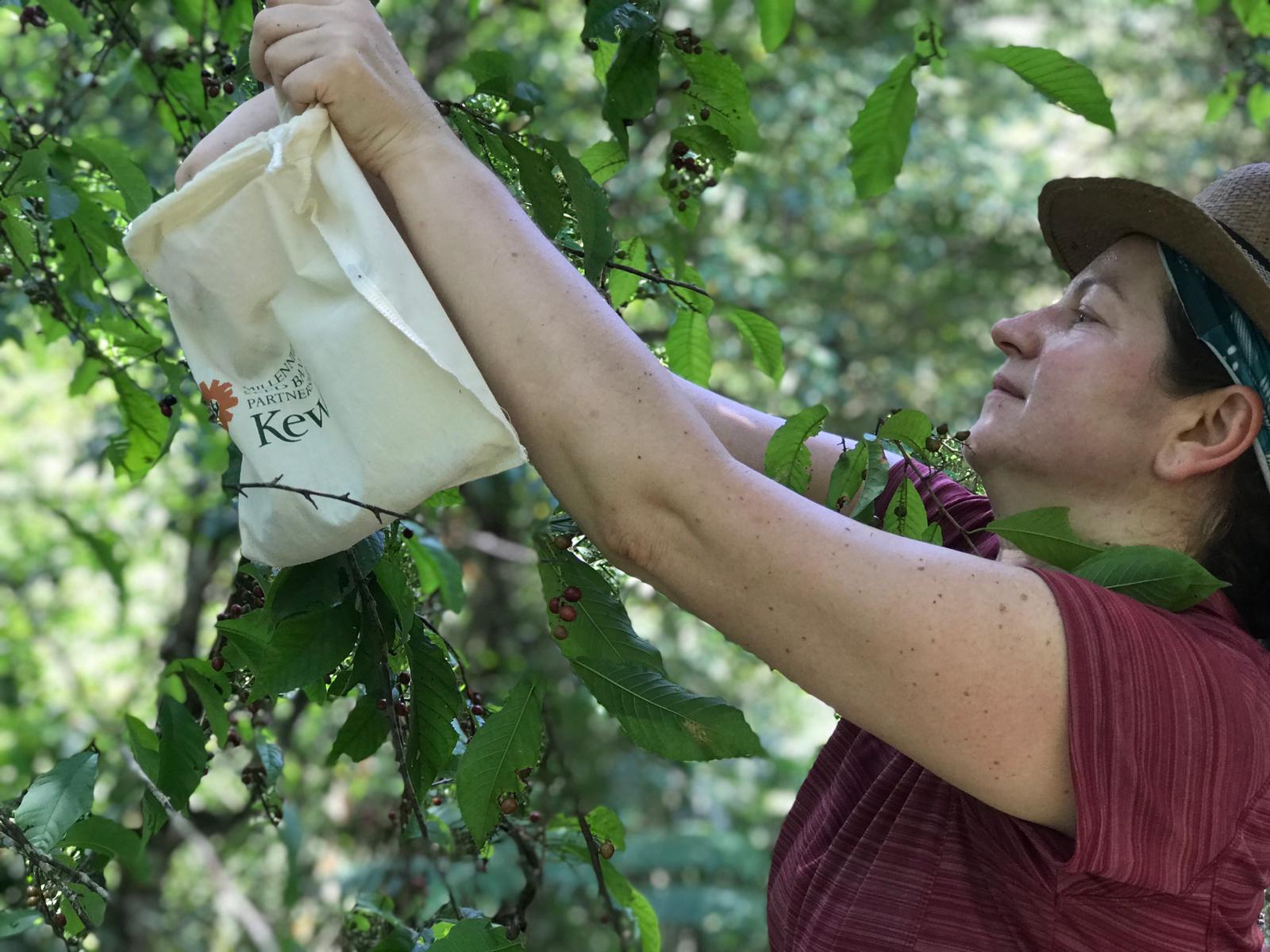 Dr Tiziana Ulian, scientist at Kew collecting seeds in the Quinchas in Colombia (RBG Kew/PA)