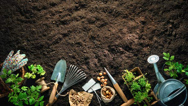 World Soil Day: 4 ways to improve your soil and avoid peat