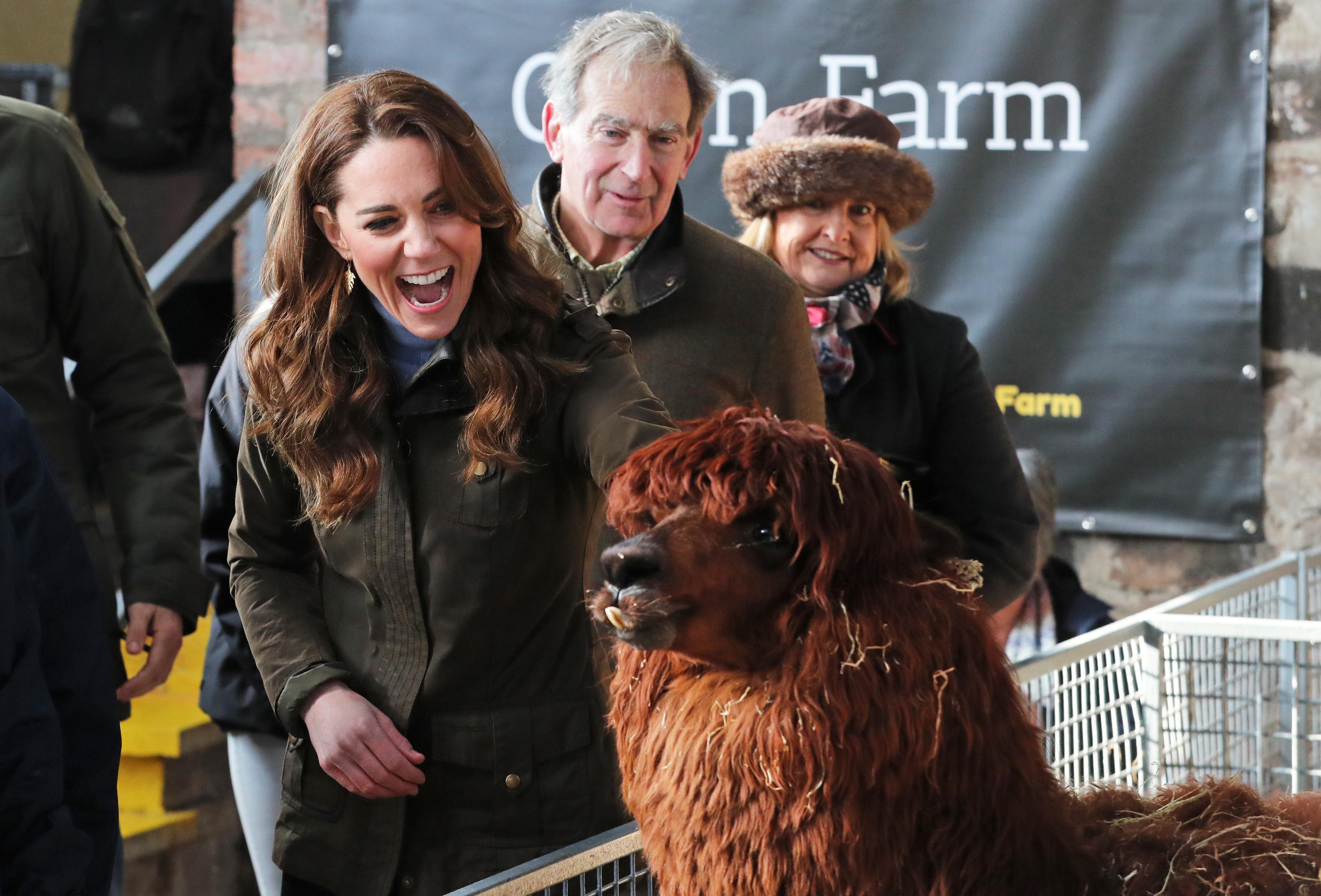 Duchess of Cambridge and an alpaca