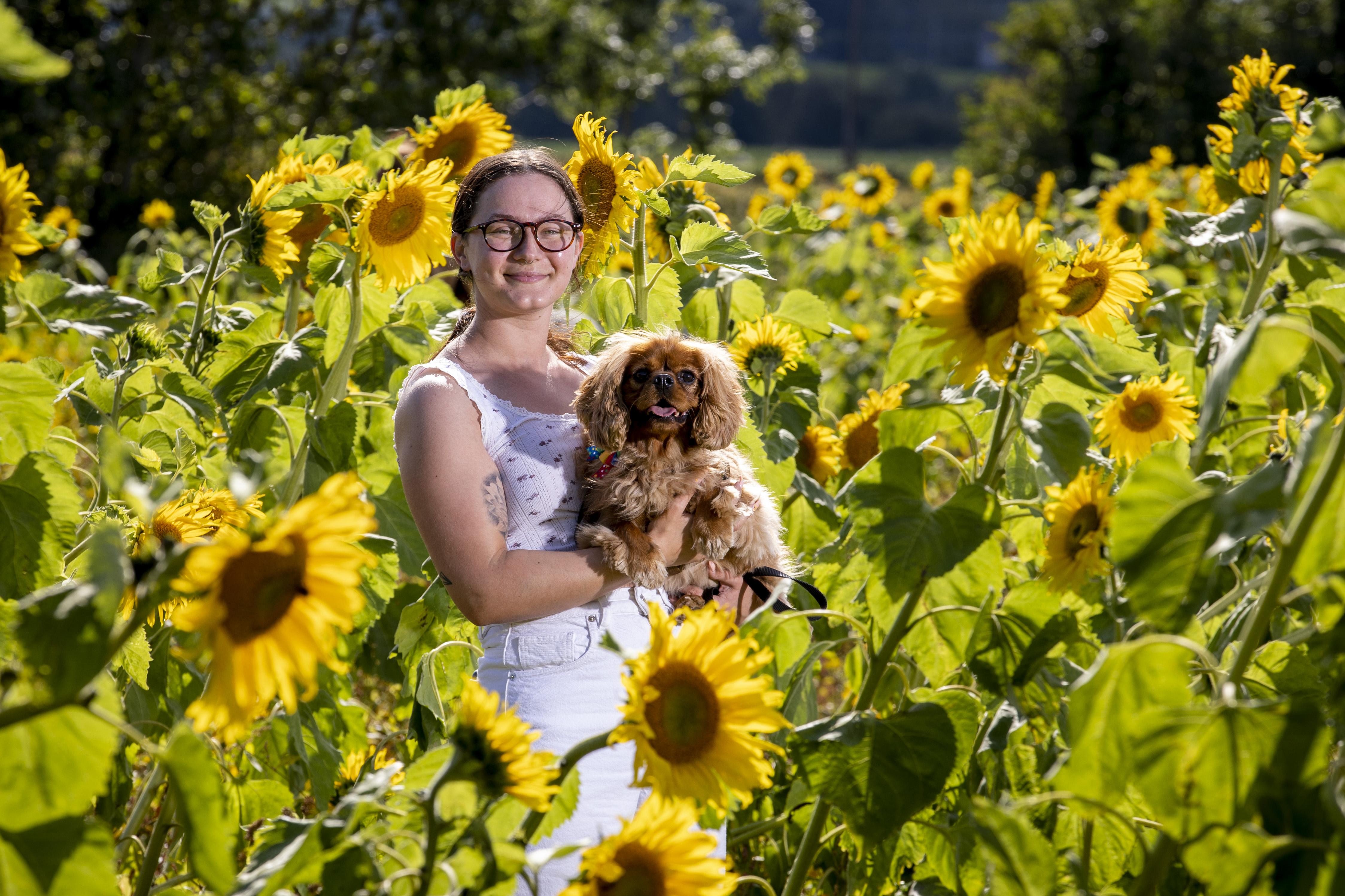 Woman and dog among sunflowers