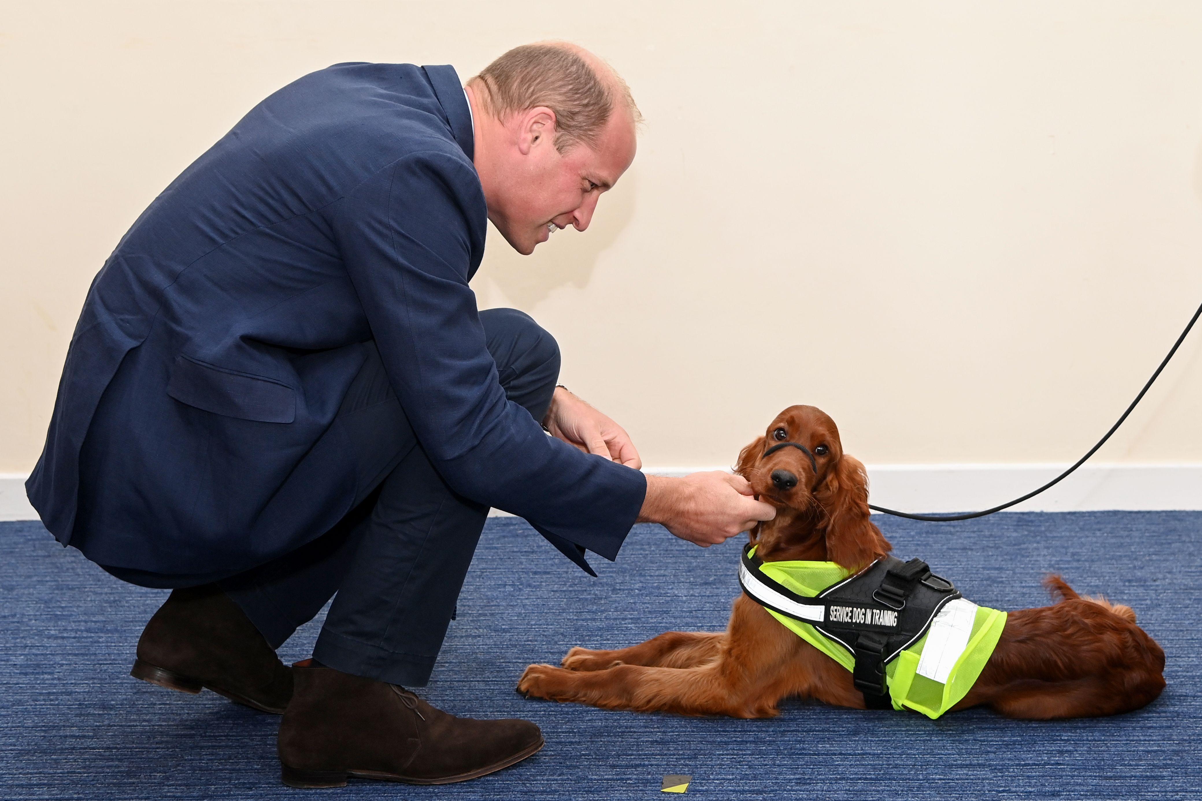 The Duke of Cambridge and an Irish setter