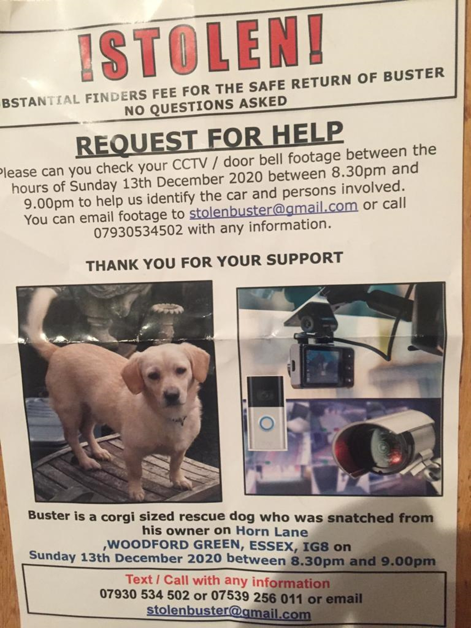 An appeal poster for the safe return of dog Buster