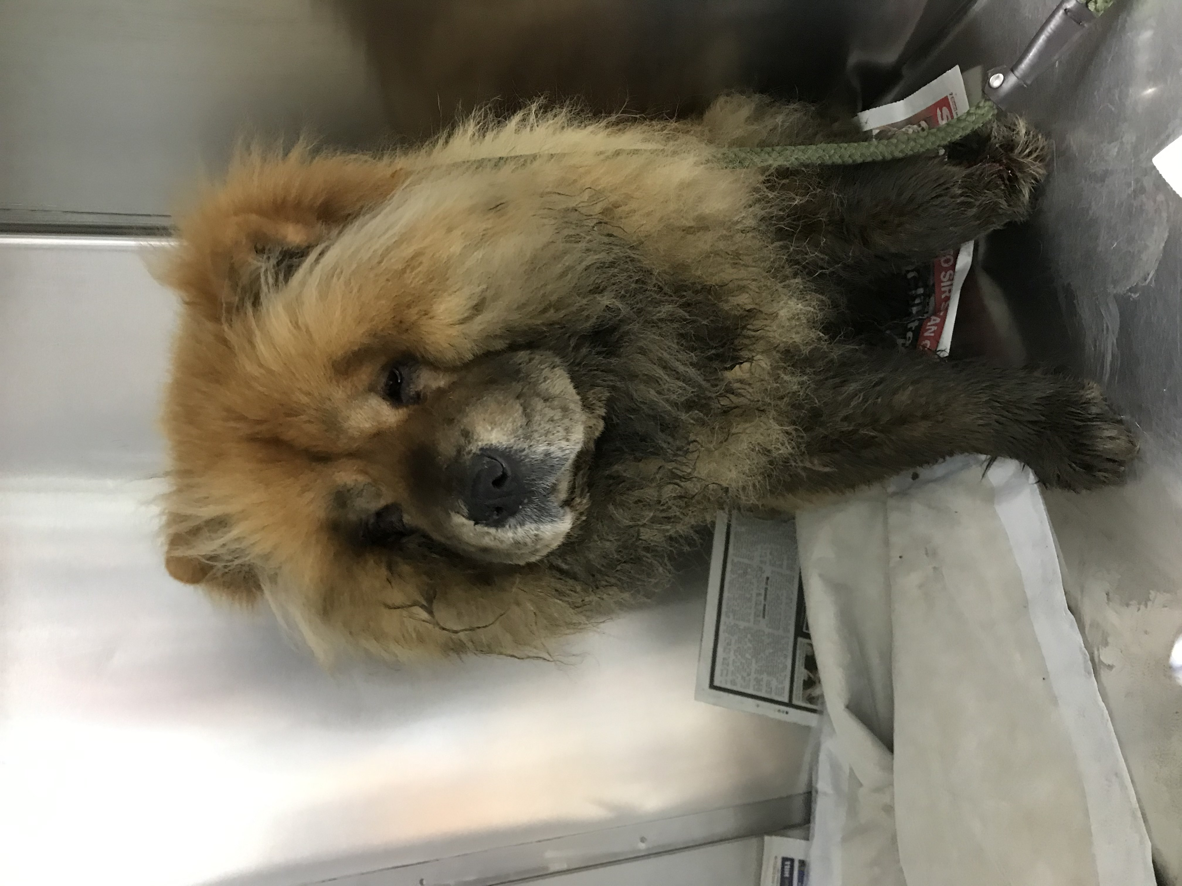 The RSPCA are now hoping to reunite the dog with its owners (RSPCA/PA)