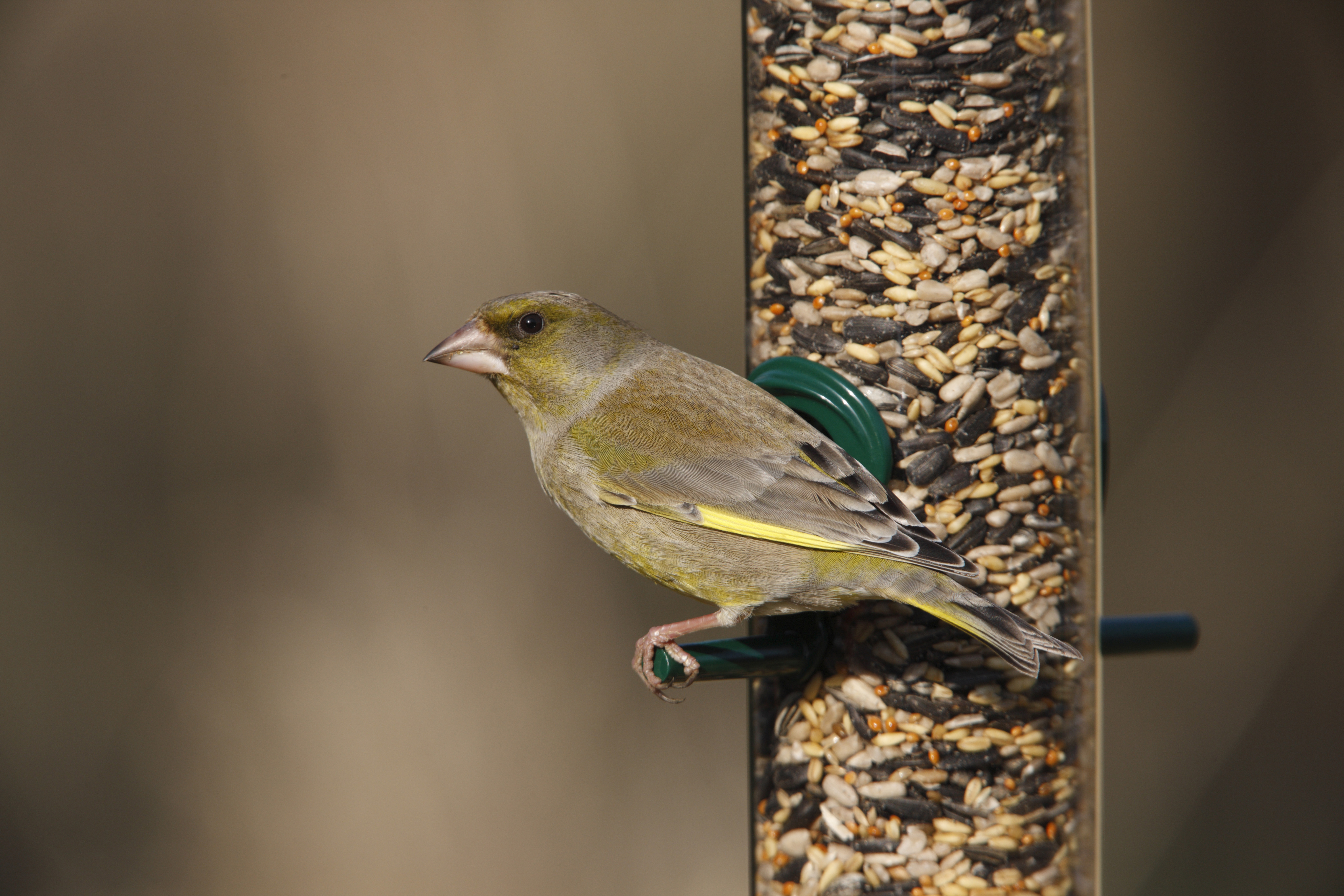 A bird feeder with a greenfinch on it (Nigel Blake/RSPB/PA)