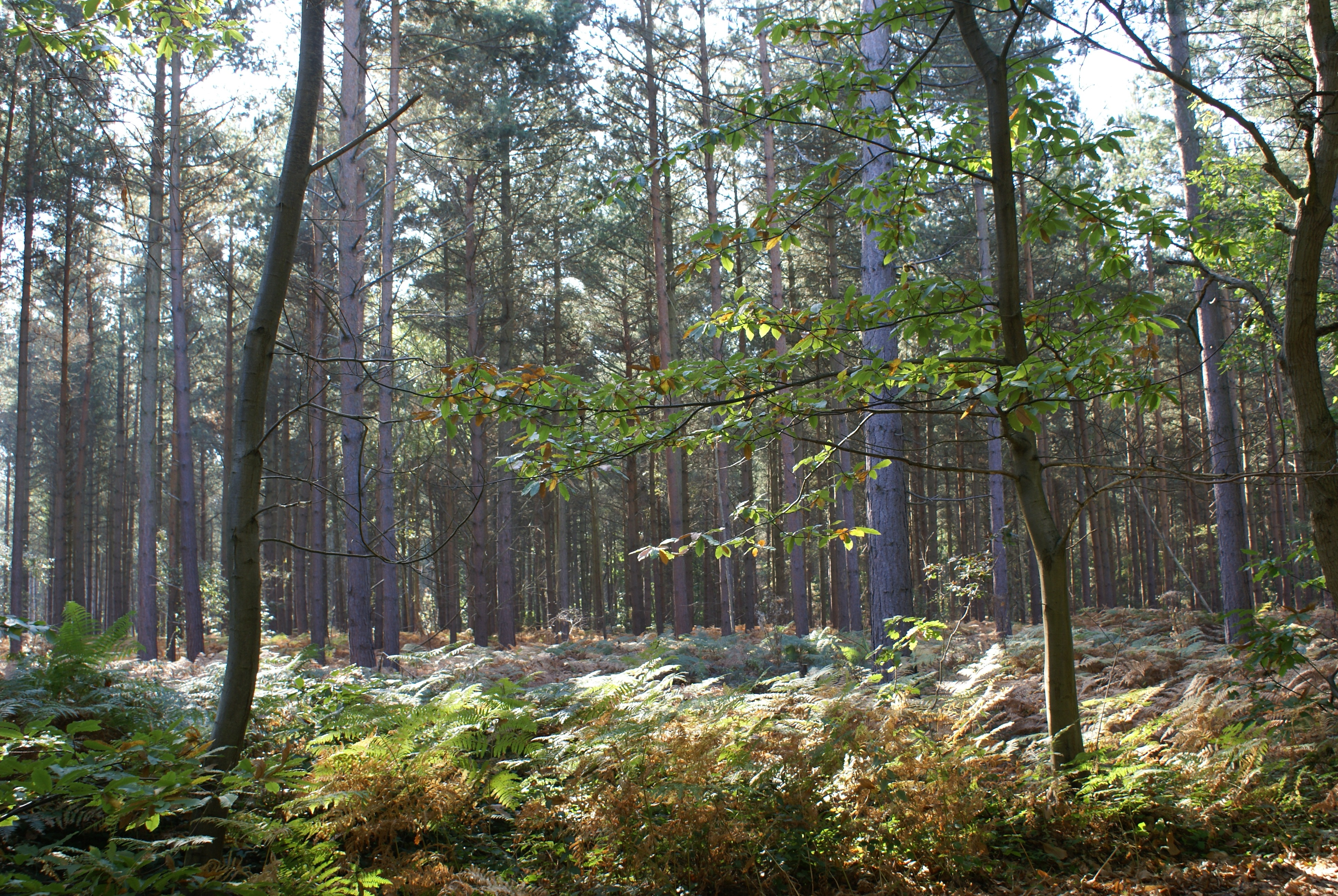 A view of trees in Blean Woods (Ray Lewis/PA)