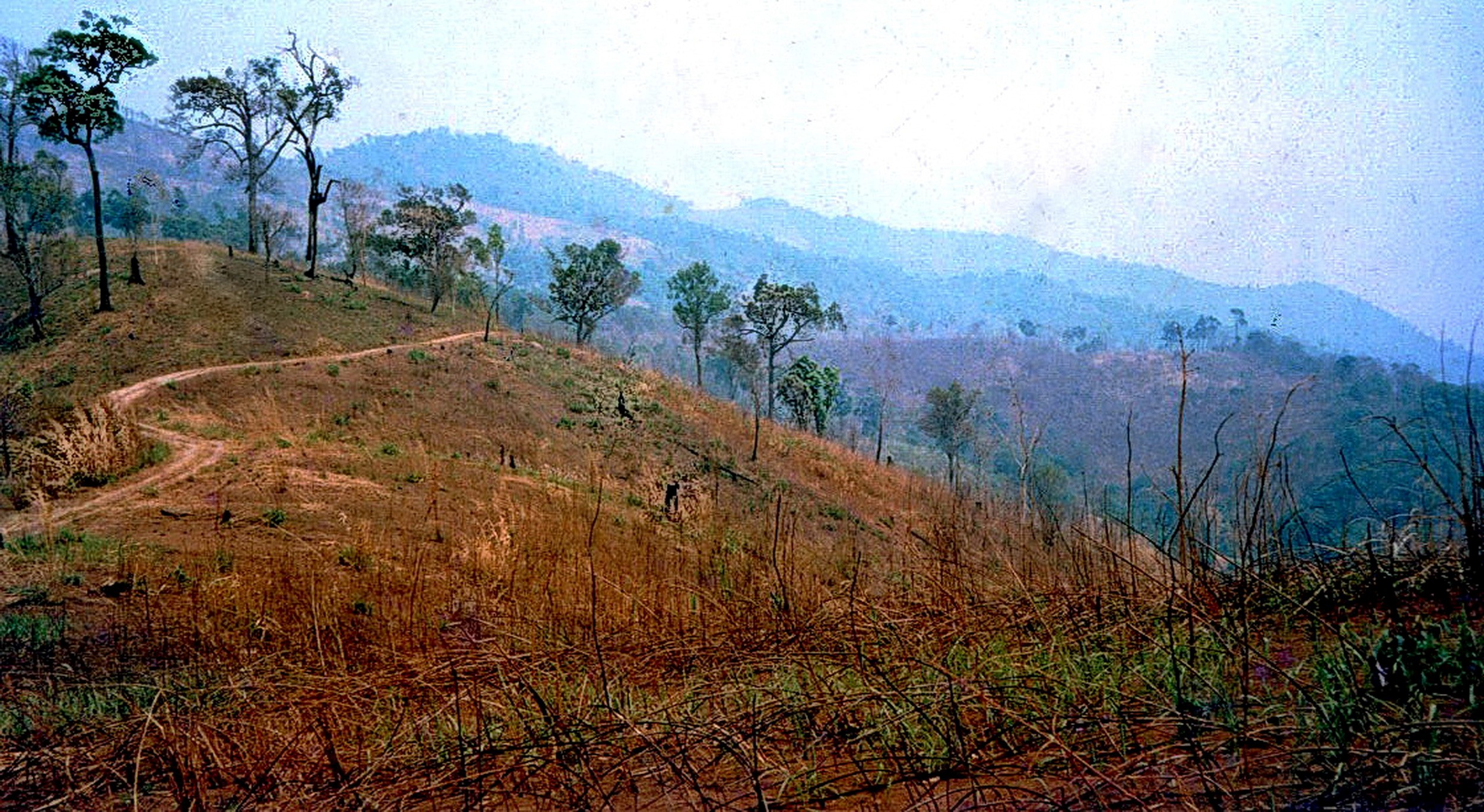 A forest area in Thailand before restoration