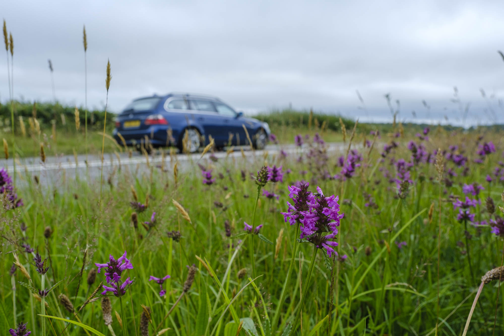 Wildflowers on a road verge in Cornwall (Matt Pitts/Plantlife/PA)