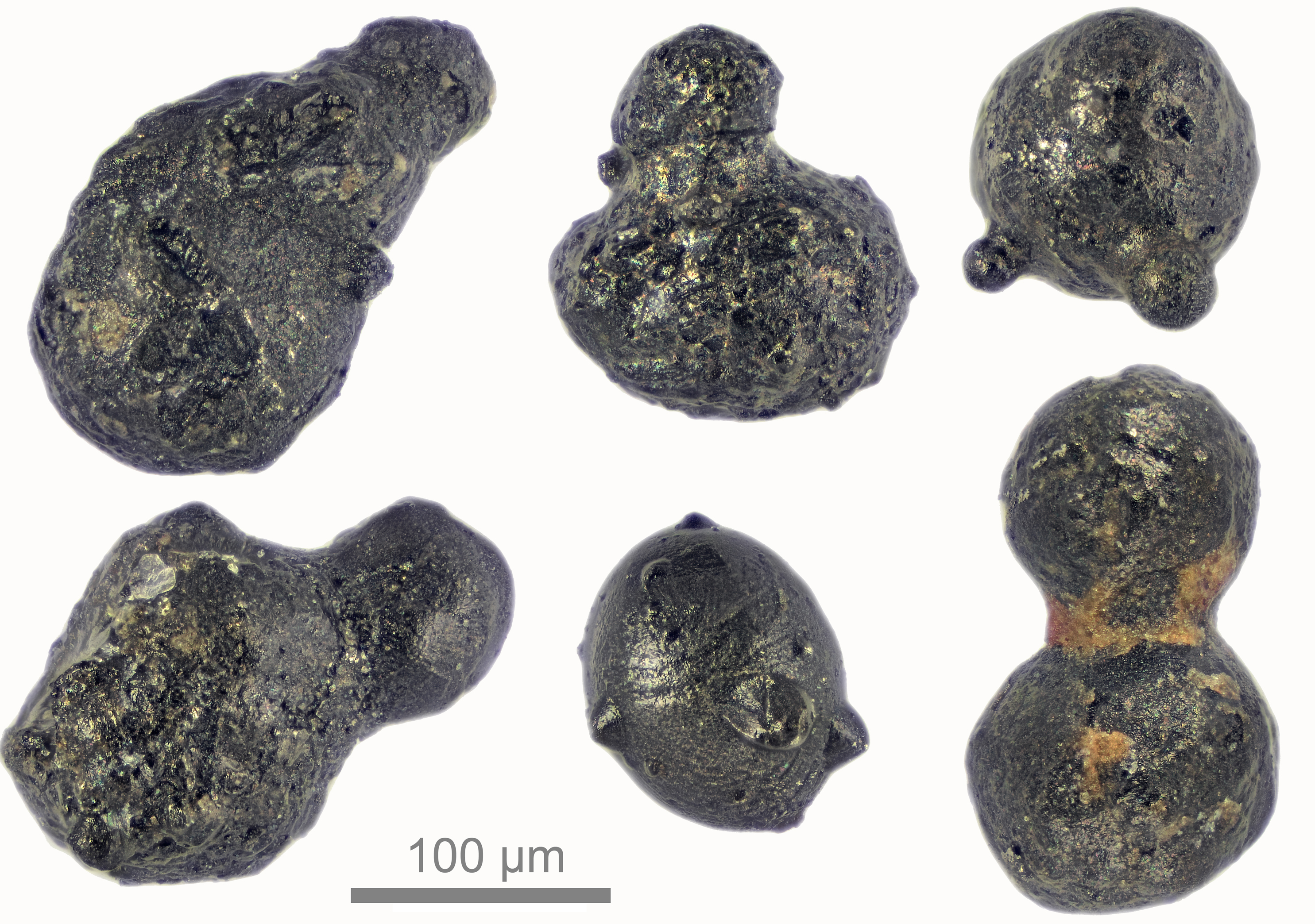 A micrograph of impact particles recovered from a mountain in east Antarctica (Scott Peterson/micro-meteorites.com/PA)