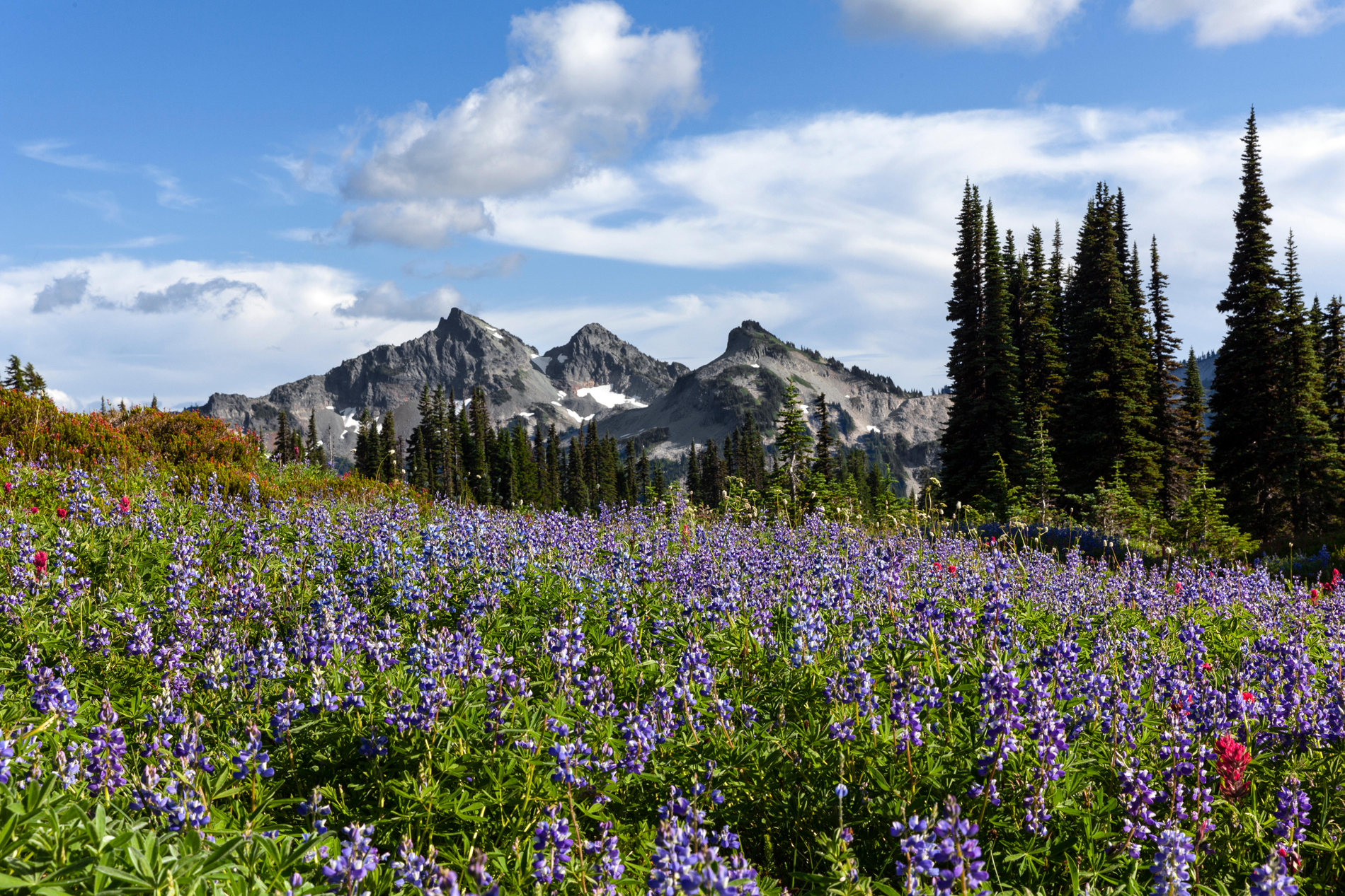 The Tatoosh Range viewed from Mazama Ridge in Mount Rainer National Park (Alamy/PA)