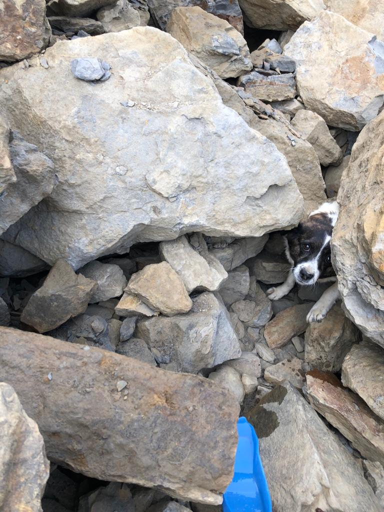 A dog trapped under rocks