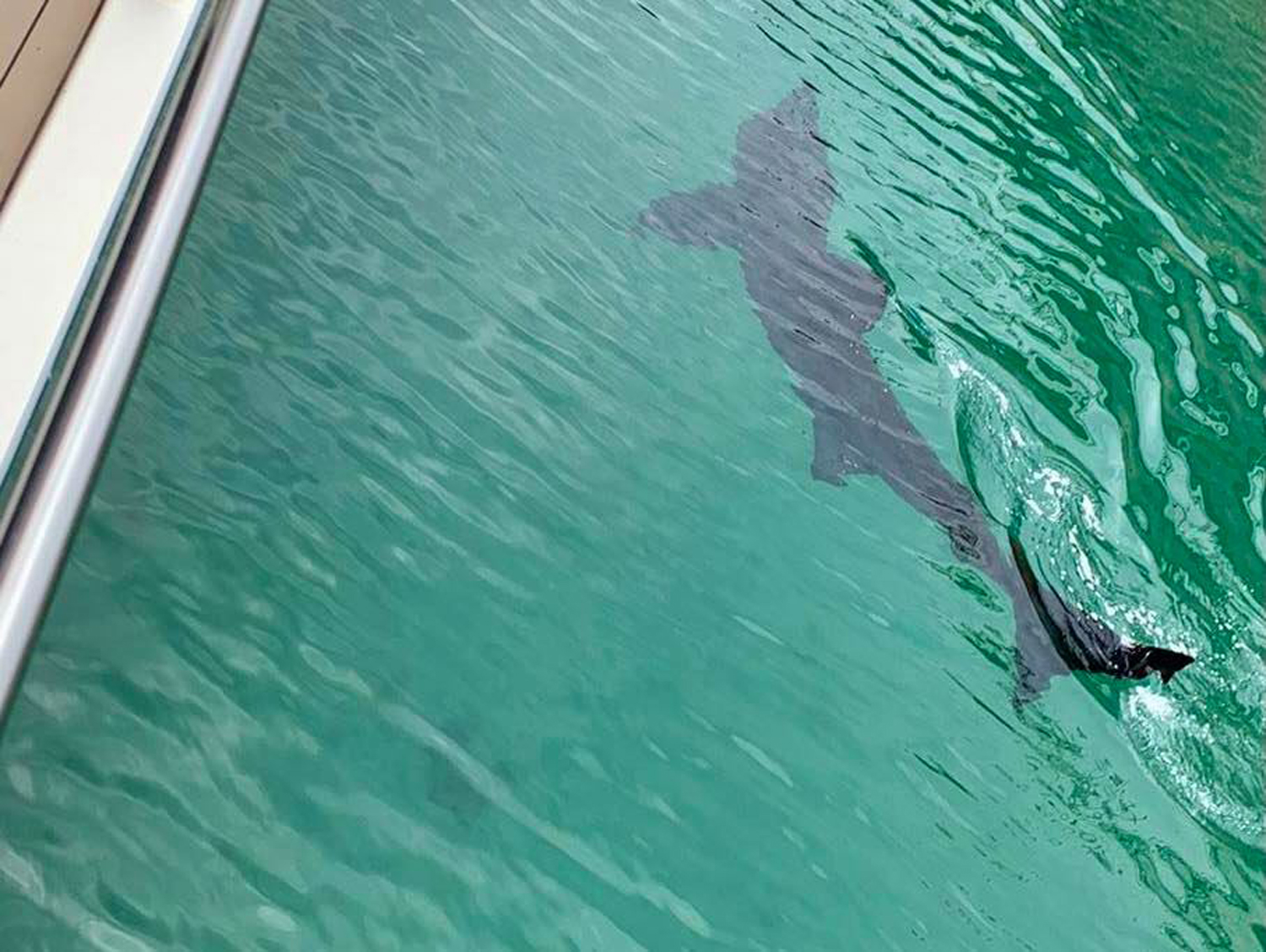 The basking shark was spotted in Torquay marina (Torquay Water Sports/PA)