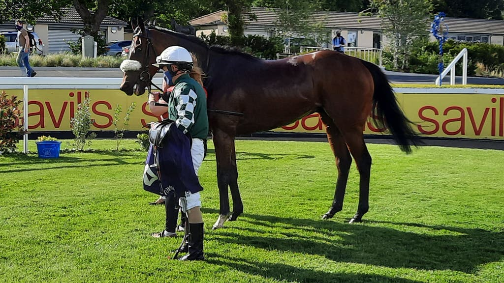 Real Appeal following his Leopardstown win