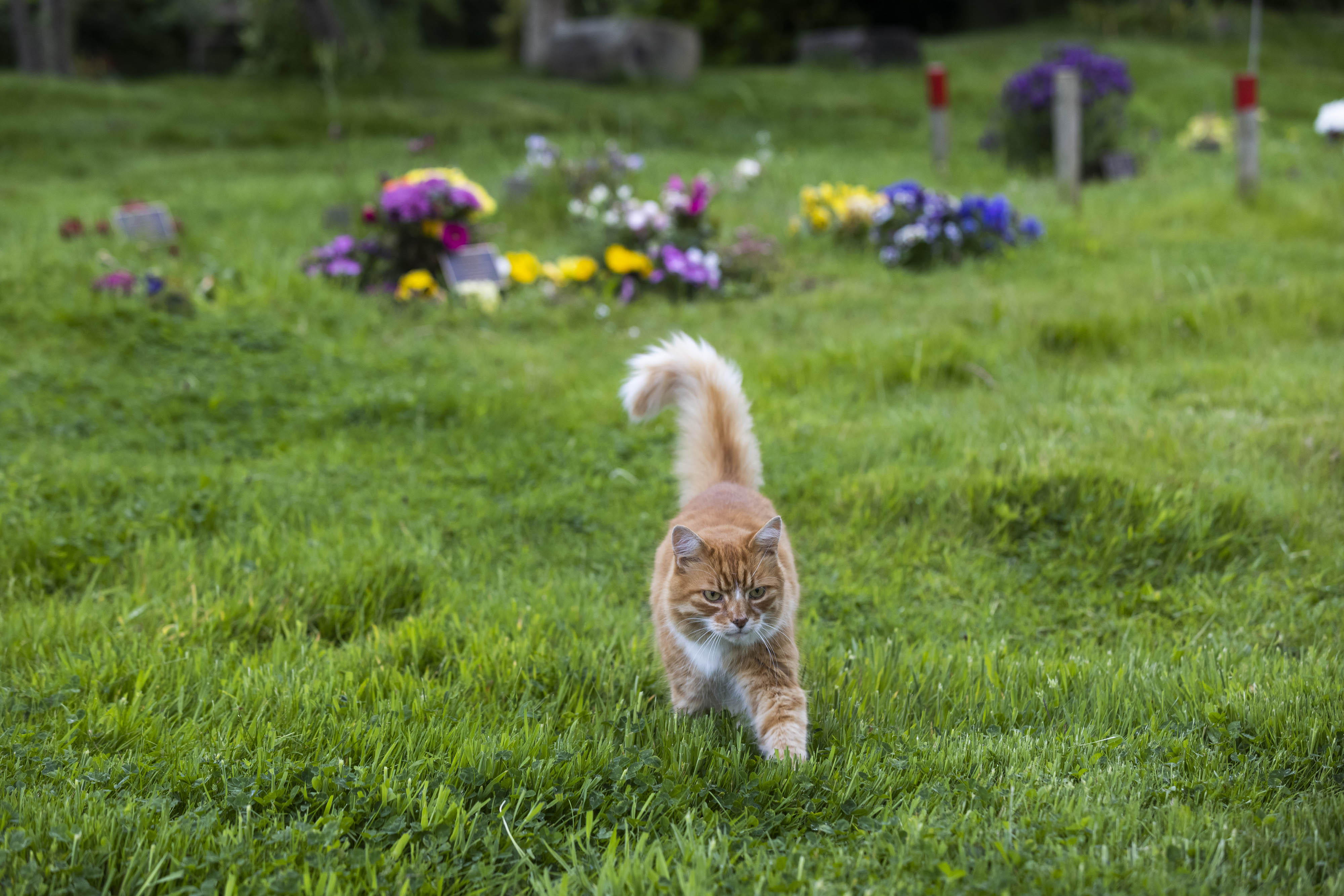 Paddy the cat, who was nominated for the Cats Protection National Cat Awards, as most caring cat